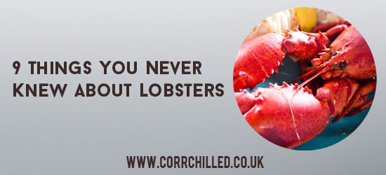 9 Things You Never Knew About Lobsters